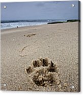 No Maw But I Got A Paw Acrylic Print by Peter Tellone