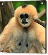 No Monkey Business Acrylic Print