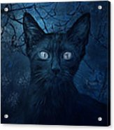 No Place For Scaredy Cats Acrylic Print by Hazel Billingsley