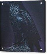 Noble Raven Acrylic Print