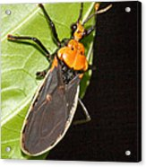 Nocturnal Bug Acrylic Print