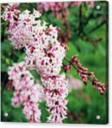Nocturne Lilac Flowers Acrylic Print