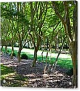 Norfolk Botanical Garden 3 Acrylic Print