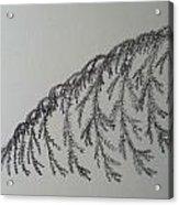 Norfolk Pine Acrylic Print