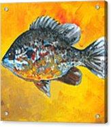 North America Sunfish Acrylic Print