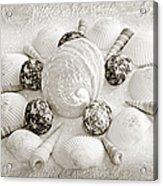 North Carolina Circle Of Sea Shells Bw Acrylic Print