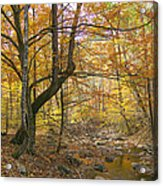 North Creek Autumn - Mid Afternoon - 04043 Acrylic Print by Byron Spencer