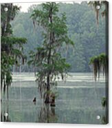 North Florida Cypress Swamp Acrylic Print