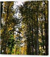 North Lions Park - Mount Vernon Washington Acrylic Print