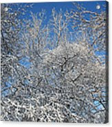 Northern Colors Acrylic Print