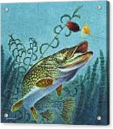 Northern Pike Spinner Bait Acrylic Print