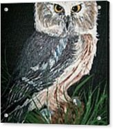 Northern Saw-whet Owl Acrylic Print by Sharon Duguay