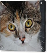 Nosey Lil Kitty Acrylic Print