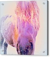 I'm The Famous Winter Nosy Spirit But I Don't Care  Acrylic Print by Hilde Widerberg