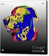 Not A Black Lab Acrylic Print