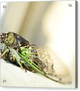 Not A Cute Bug Acrylic Print