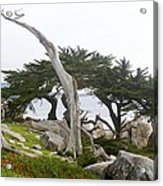 Not The Ghost Tree Acrylic Print