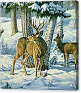 Not This Year - Mule Deer Acrylic Print