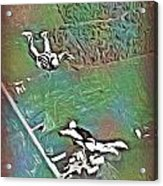 Nova Scotia Skydivers Acrylic Print