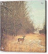 November Deer Acrylic Print