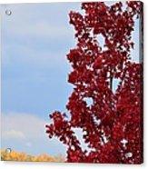 November Red Acrylic Print