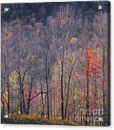 November Woods Acrylic Print
