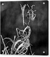 Novembers Ways Acrylic Print