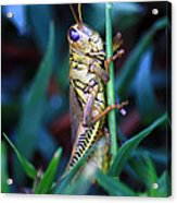 Now I Can See You Better Acrylic Print