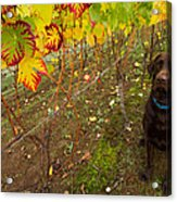 Nute Watches The Vines Acrylic Print by Jean Noren