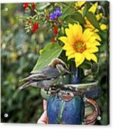 Nuthatch Bird Having Tea Acrylic Print