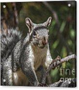 Nuts Please Acrylic Print