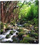 Banyan Nuuanu Stream Acrylic Print