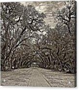Oak Alley 3 Sepia Acrylic Print by Steve Harrington