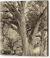 Oak Alley Backyard Seoia Acrylic Print