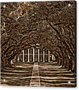Oak Alley Bw Acrylic Print