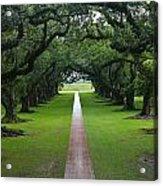 Oak Alley Acrylic Print