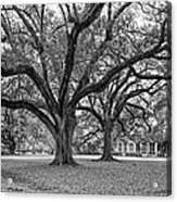 Oak Alley Grounds Bw Acrylic Print