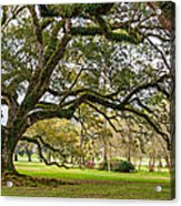 Oak Alley Reverie Acrylic Print