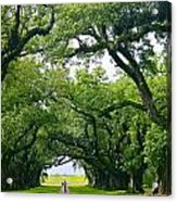 Oak Alley Trees Acrylic Print