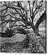 Oak And Ivy Bw Acrylic Print