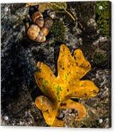Oak Leaf And Acorn In Autumn Acrylic Print