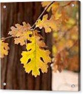 Oak Leaf Acrylic Print by Denice Breaux