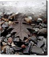Oak Leaf On A Winter's Day Acrylic Print by Steven Valkenberg