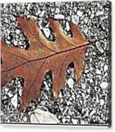 Oak Leaf On Asphalt  Acrylic Print