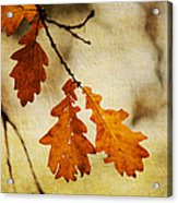 Oak Leaves At Autumn Acrylic Print