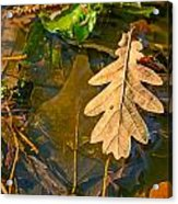 Oak Leaves In A Puddle Acrylic Print