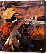 Oak Leaves Acrylic Print