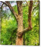 Oak On The Etowah Acrylic Print