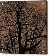 Oak Silhouette  Acrylic Print