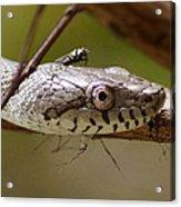 Oak Snake And Fly Acrylic Print